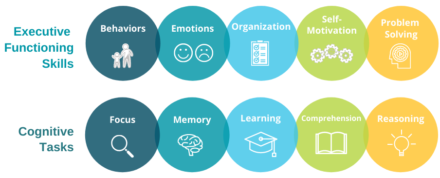 FINAL Cognitive Skills and Executive Functioning Skills Graphic Transparent-1-1