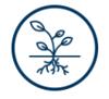 icon_brain balance program_roots
